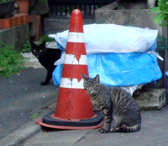 Azabu_juban_cats2