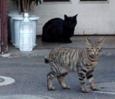 Azabu_juban_cats3