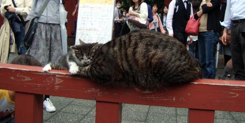 Akamon_cat2