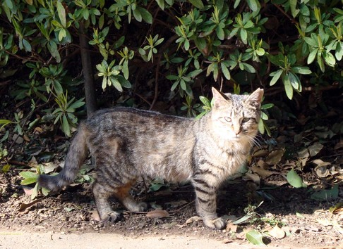 Ueno_cat1