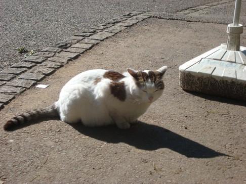 Ueno_cat2