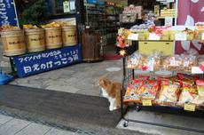 Nikko_cat1