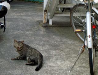 Jimotocat1