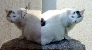 Kamihongo_cat1