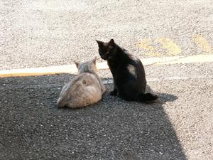 Yanaka_ginza_cats1